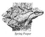 2008 Spring Newsletter